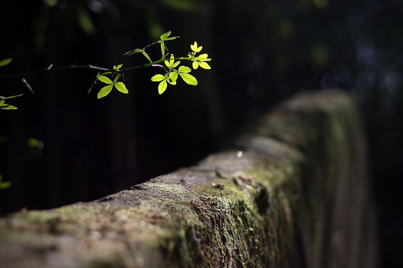 Close-Up Of Plant By Stone Wall