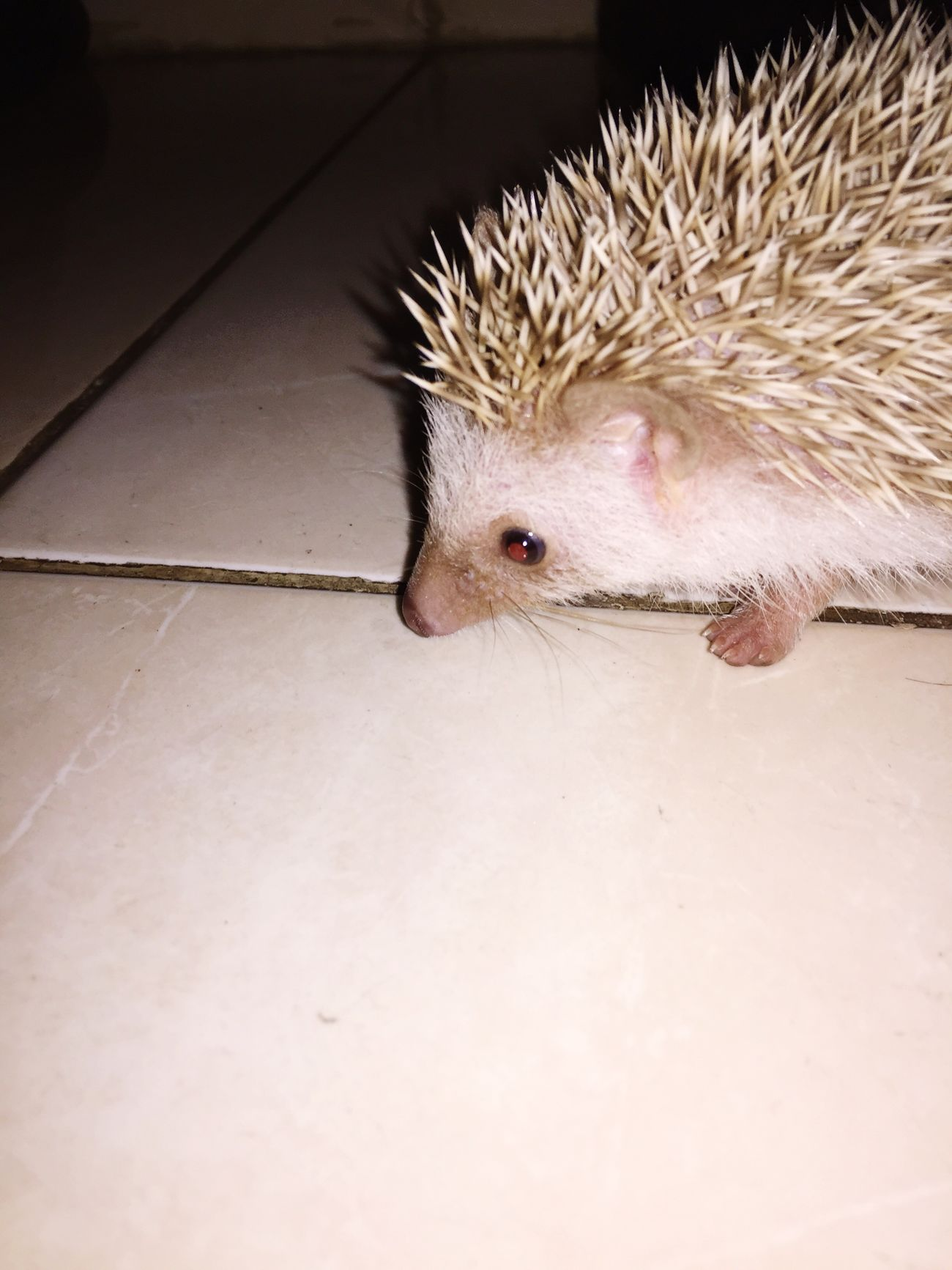 My nduutt😝 Hedgehog