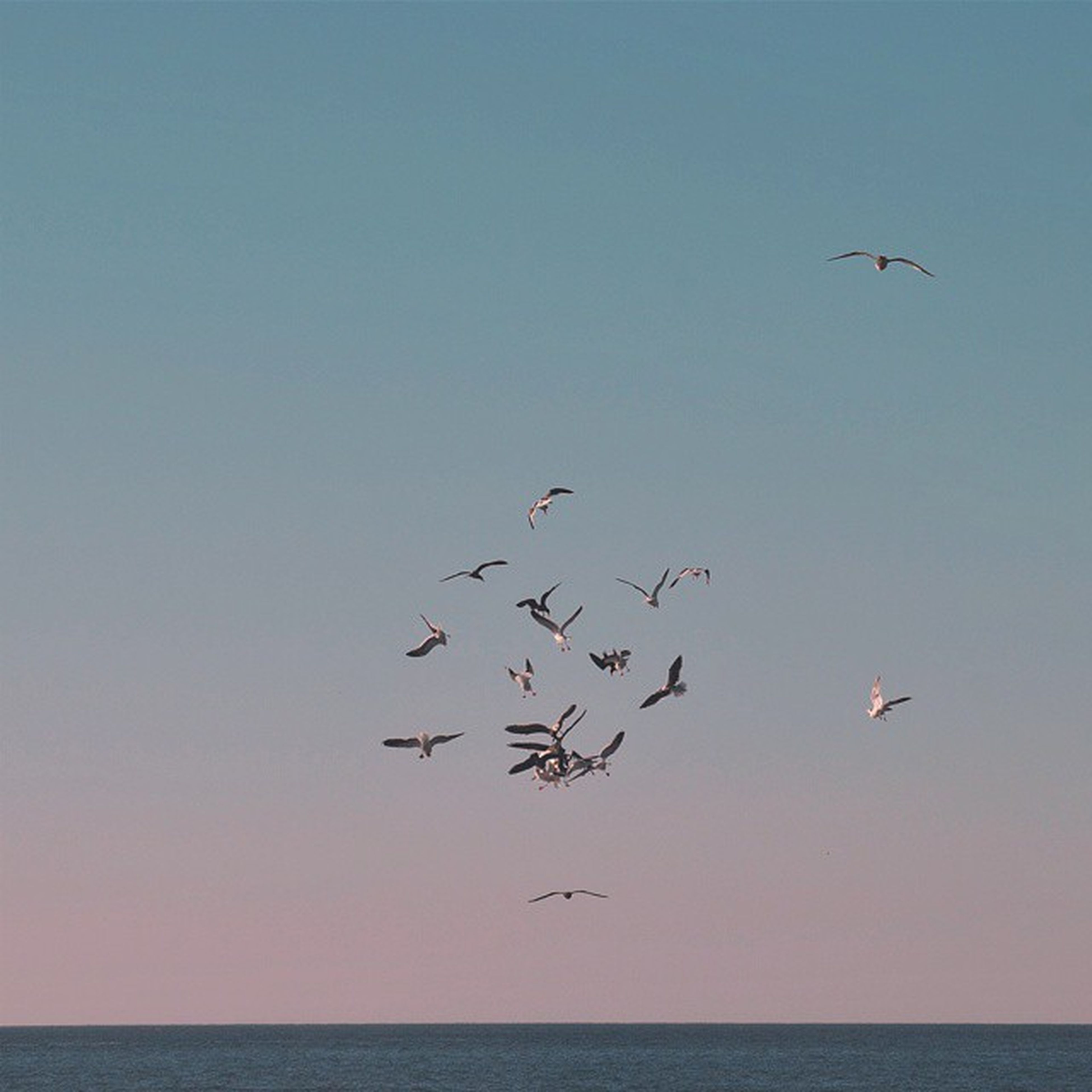 flying, bird, animal themes, animals in the wild, mid-air, wildlife, clear sky, spread wings, flock of birds, nature, sky, copy space, medium group of animals, beauty in nature, low angle view, outdoors, sea, scenics, seagull