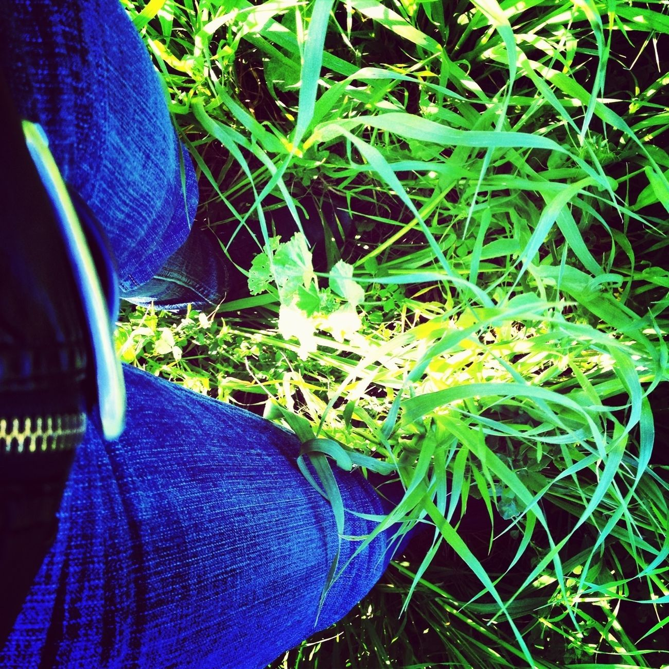 Spring Enjoying Life The Grass Is Green Iphonephotography