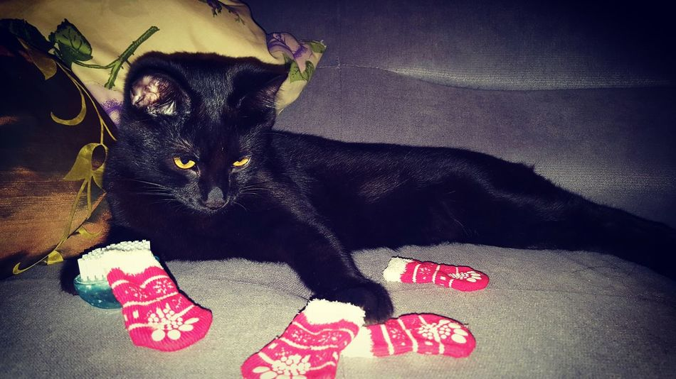 TK Maxx Socksie Saint Nicholas Day Cat Black Christmas Is Coming Boots Cleaning MrFranky Funny Always Be Cozy