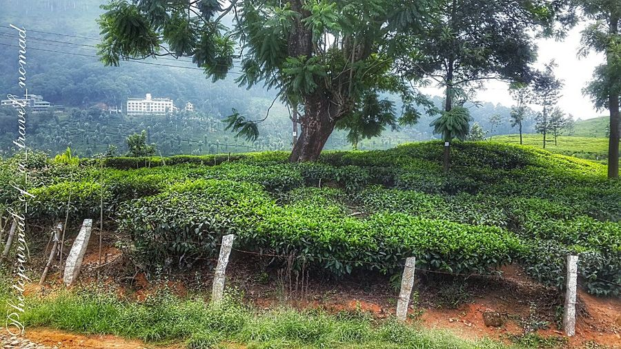 The love for green and the naturality of it ... Natureshiddenbeauty Travelling EyeEm Nature Lover Eyeem4photography - Indian Attractions EyeEm Best Shots - Landscape Nature_perfection Green Green Green!  Eyem Misty Day Mountains And Sky Natureshiddenbeauty