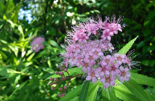 皆さん今日も一日お疲れさまでした~🙋 Flower Flowerporn Beautiful Healing Shot Kitakyushu Japan EyeEmbestshots EyeEmBestPics