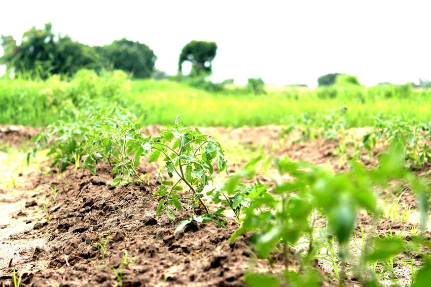 Nature Agriculture Field Growth Rural Scene Plant Green Color No People Day Outdoors Grass Social Issues Landscape Beauty In Nature Tree Vine - Plant Close-up Irrigation Equipment Freshness