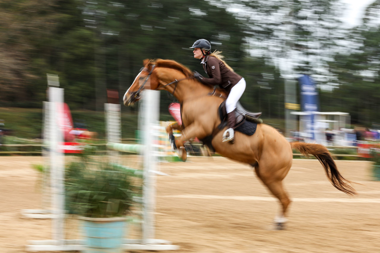 Beautiful stock photos of pferde, competition, running, sports race, horse