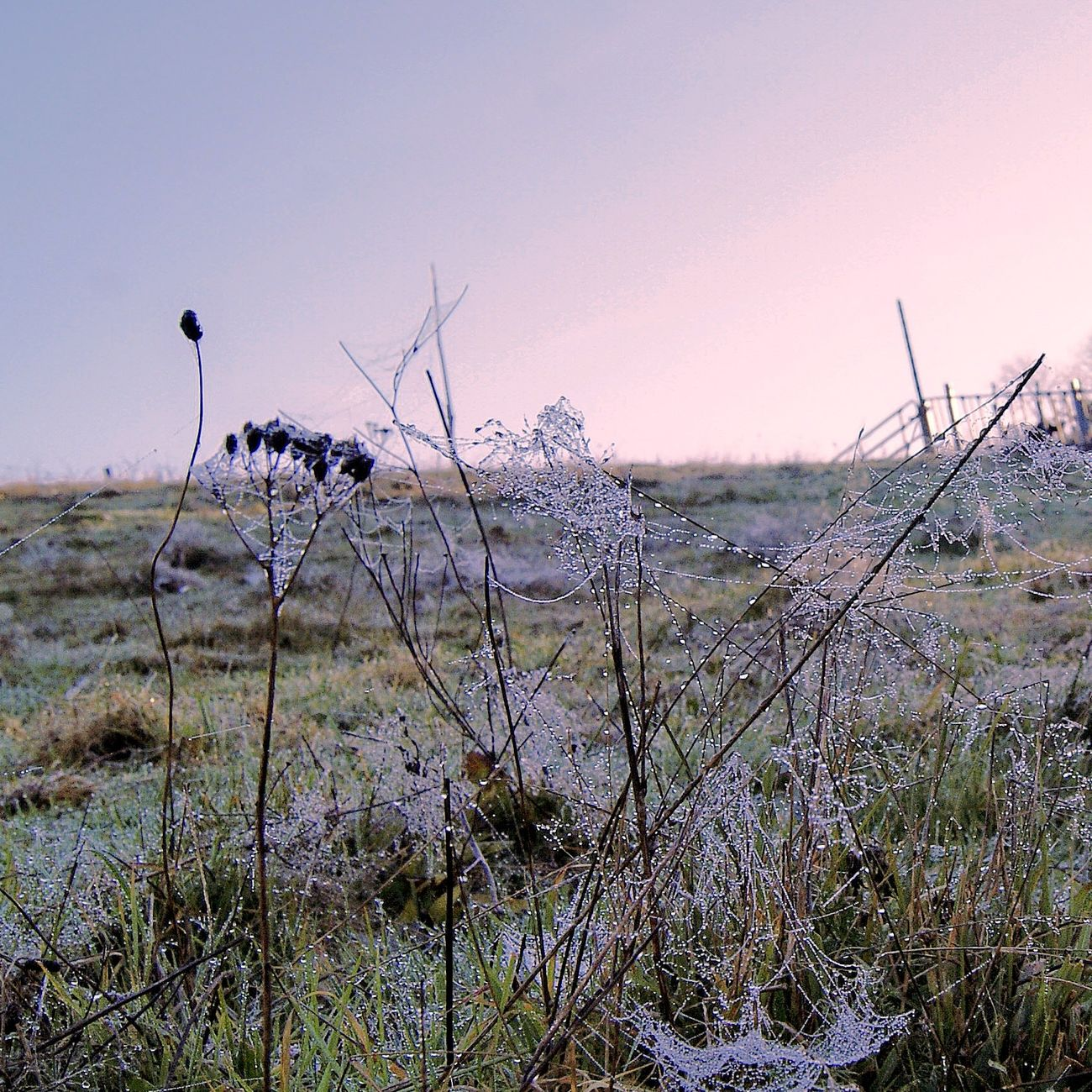 Nature Plant Morning View Grassfield Beauty In Nature Fragility Cold Days