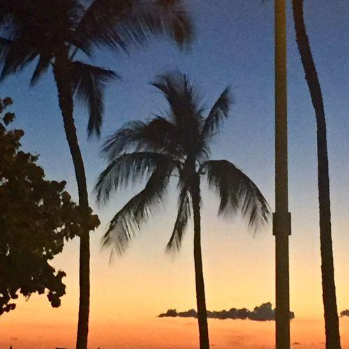 Palm Trees Tropics Tropical Island Island Oahu Hawaii Hawaiian Islands Cloud - Sky Sky Scenics Palm Frond Sunset Tropical No People Beach Outdoors Island Of Oahu, Hawaii Oahu, Hawaii The Week On EyeEm Paint The Town Yellow Been There. Second Acts Oahu / Hawaii An Eye For Travel