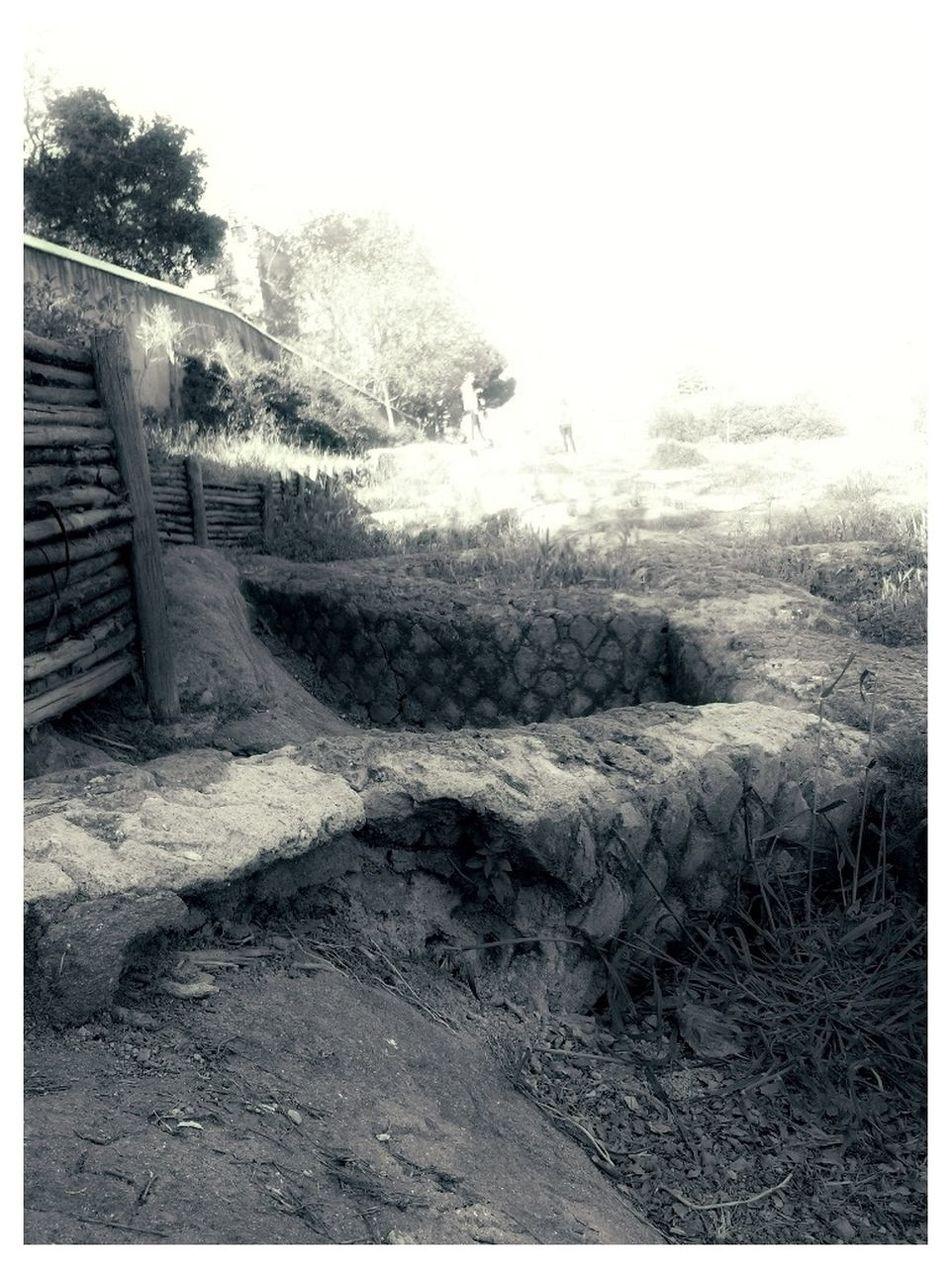 Taking Photos Black And White Hopus Reticulatus