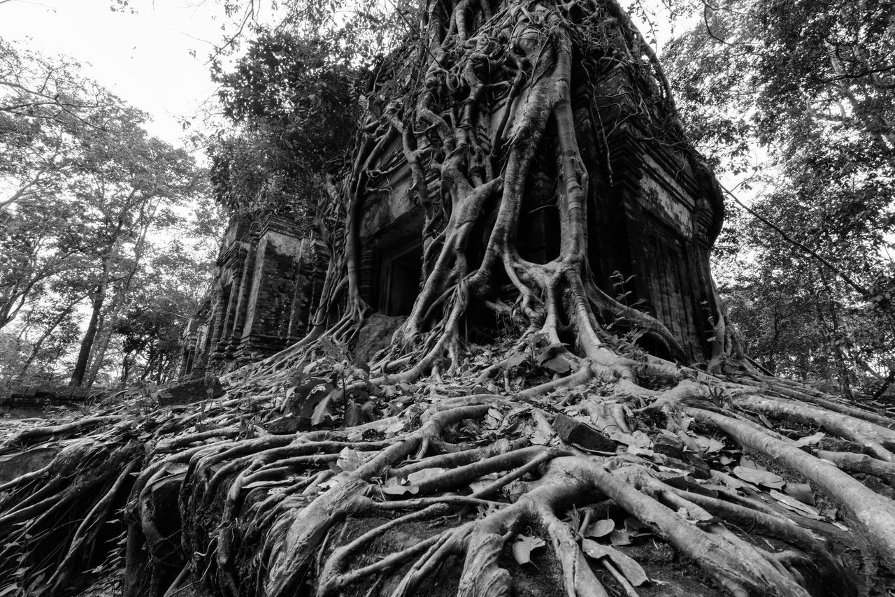 Roots of an old tree Beauty In Nature Black And White Buildig Cultures Day Forest Growth History Low Angle View Monument Nature No People Old Outdoors Religion Root Roots Ruins Sky Spreading Temple Tree Tree Tree Trunk
