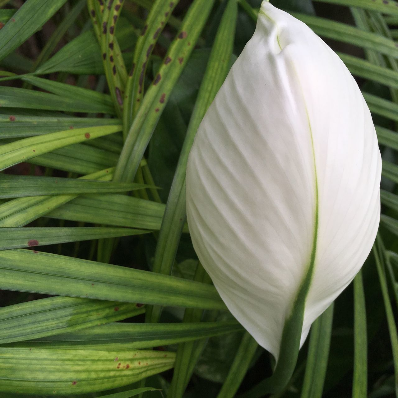 growth, plant, freshness, flower, petal, beauty in nature, green color, nature, close-up, no people, white color, day, flower head, focus on foreground, outdoors, leaf, fragility, blooming