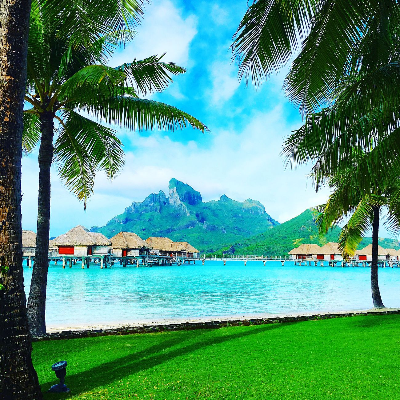 Bora Bora  Outdoors Nature Beauty In Nature Water Tree Tranquil Scene Sea