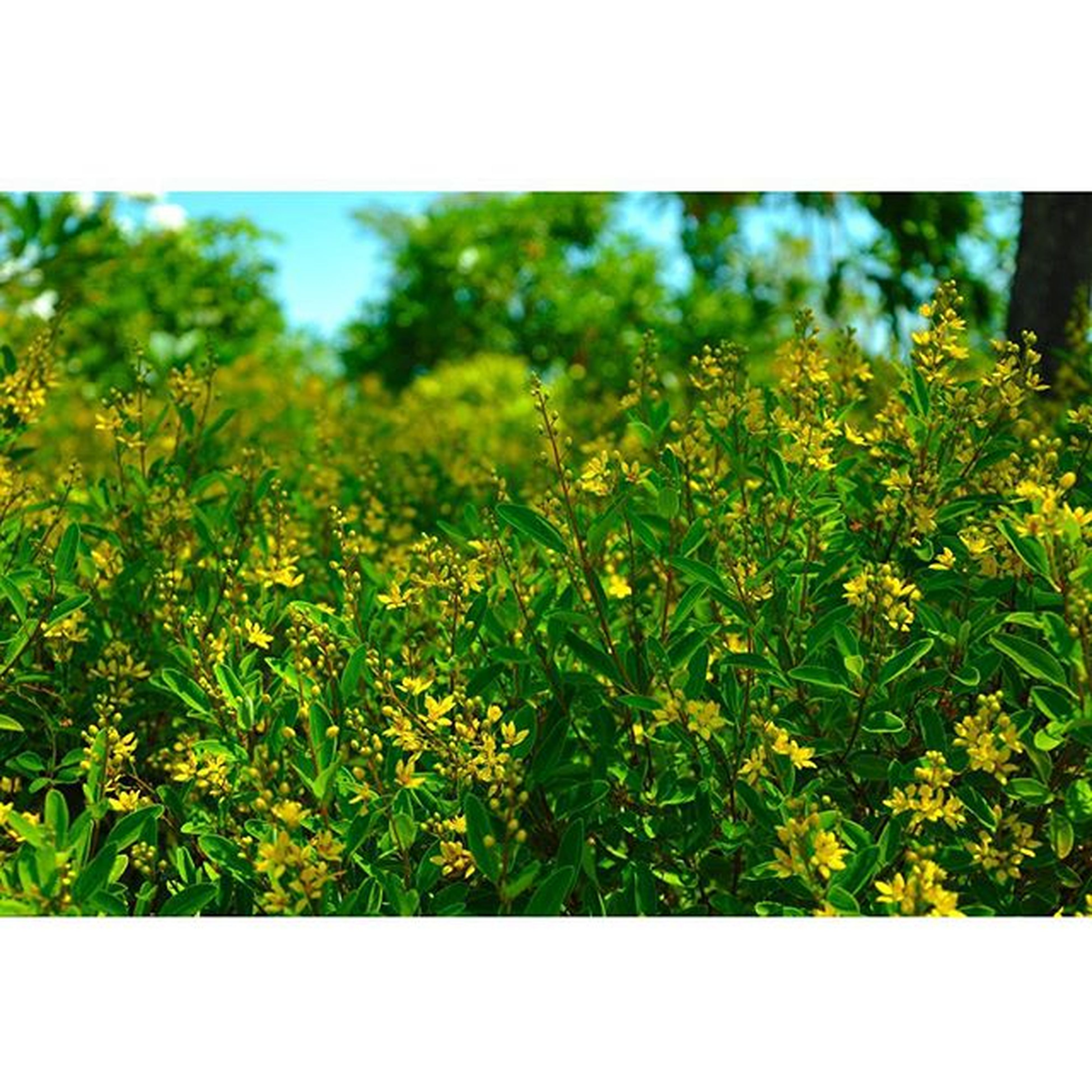 transfer print, growth, auto post production filter, green color, nature, beauty in nature, freshness, plant, yellow, flower, field, tree, lush foliage, close-up, selective focus, tranquility, leaf, focus on foreground, day, outdoors
