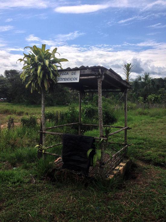 Agriculture Coffee Coffee Station Coffee Time Farmers Market Farms Landscape Palm Tree Peru Peru Region Rain Forest Rain Forest Plants