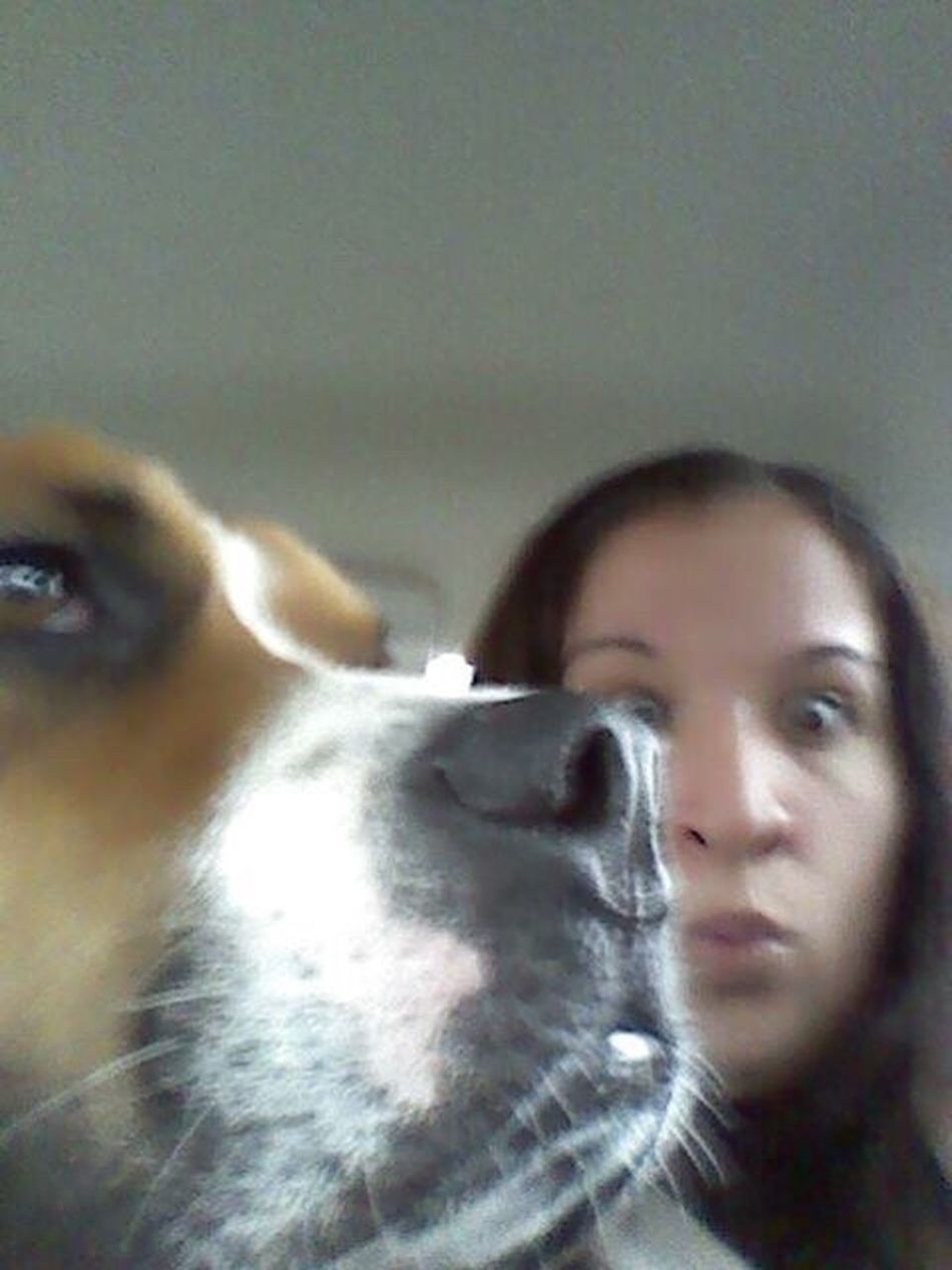 LongIslandNY Sammy♡ Sammythebeabullonfacebook Sammythebeabull Dogs Of EyeEm Dog❤ Dogmom Petsofeyeem