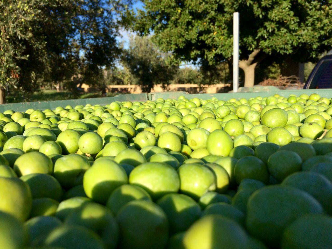 Beautiful stock photos of granny, Abundance, Apple - Fruit, Campobello di Mazara, Collection