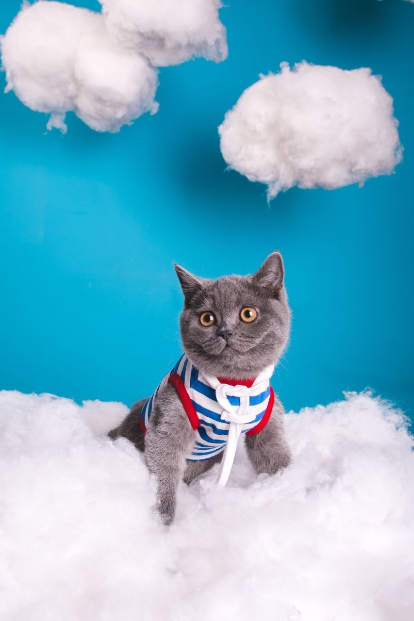 Close-Up Of Cat On Cotton Against Blue Background