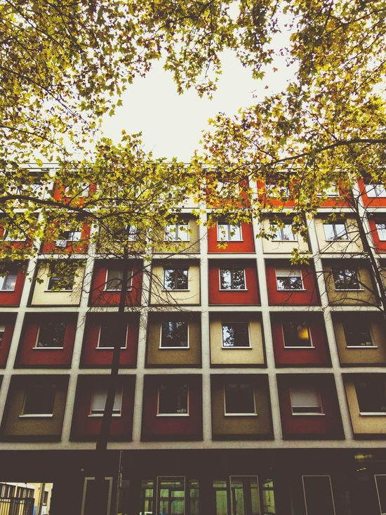 Low Angle View Tree Window Building Exterior No People Day Outdoors Full Frame Architecture Built Structure Branch Sky Autumn Trees Residential Building Student Accommodation Apartments Apartment Building Squares Squares And Rectangles Bare Trees Autumn Colors Autumncolors Urban Geometry Urban Shapes Street Photography