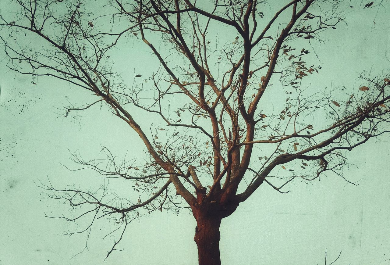 Tree Nature Branch Bare Tree Sky Outdoors Tranquility No People Beauty In Nature Day Textured  Vintage Photo VintageLooks EyeEm Best Edits Fragility Growth Awesome_captures First Eyeem Photo EyeEmBestPics Silhouette Shades And Shadows AWESOME!!