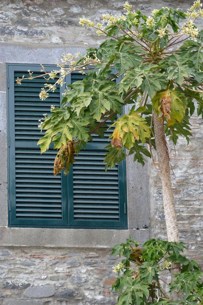 Window Windows Window Shutter Shutters Tree