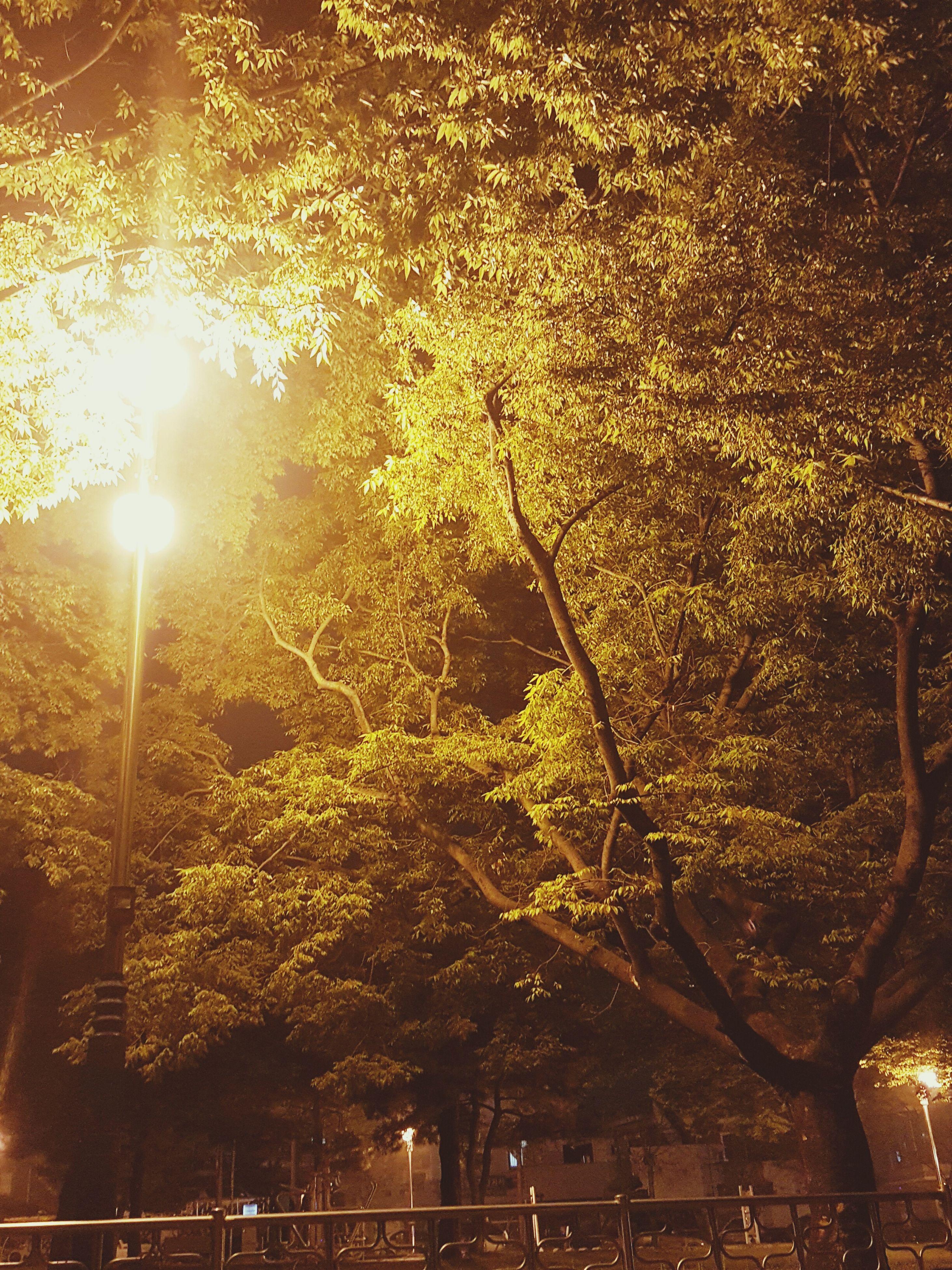 tree, illuminated, street light, branch, lighting equipment, growth, night, low angle view, nature, beauty in nature, tranquility, outdoors, sunlight, no people, lens flare, season, sun, sunbeam, light - natural phenomenon, glowing