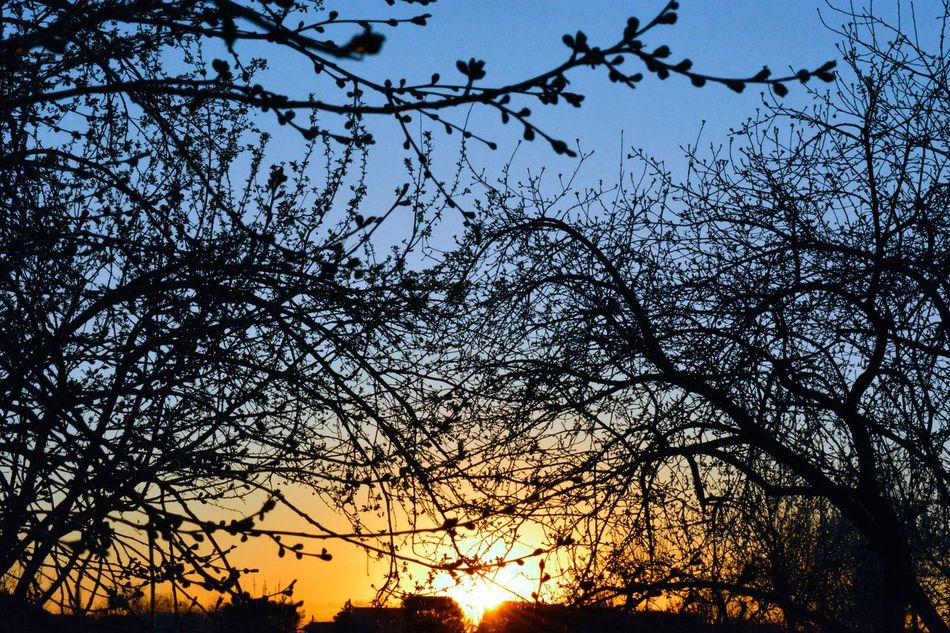 Sky Nature Tree Sunset Beauty In Nature Tranquility Silhouette Backgrounds Scenics Close-up Growth Low Angle View Fragility Complexity Branches Sunlight And Shadow Sunset✨trees✨ Tranquil Scene Buds❤ Buds On Branch Tranquility Sunbeam Sunlight ☀ Beauty In Nature Tree Sunset✨trees✨ EyeEmNewHere