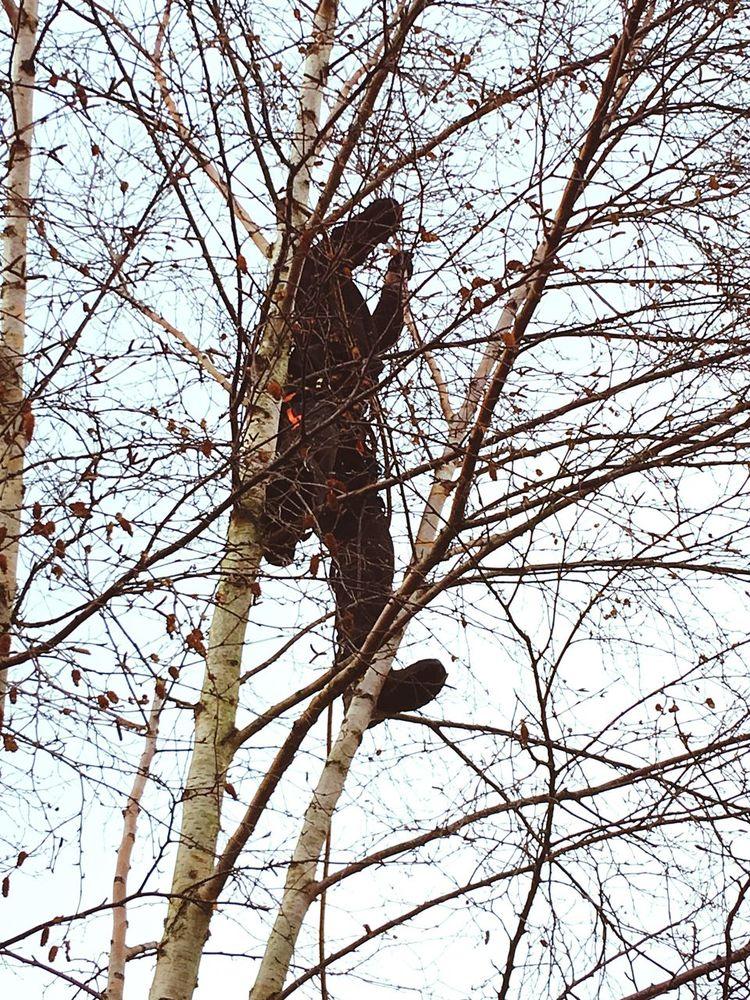 Man in a tree. Tree Surgeon trespassing