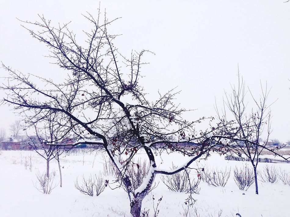 Nature Snow Winter Cold Temperature Beauty In Nature Bare Tree Tree Branch Clear Sky Tranquility No People Outdoors Tranquil Scene Day Sky Scenics