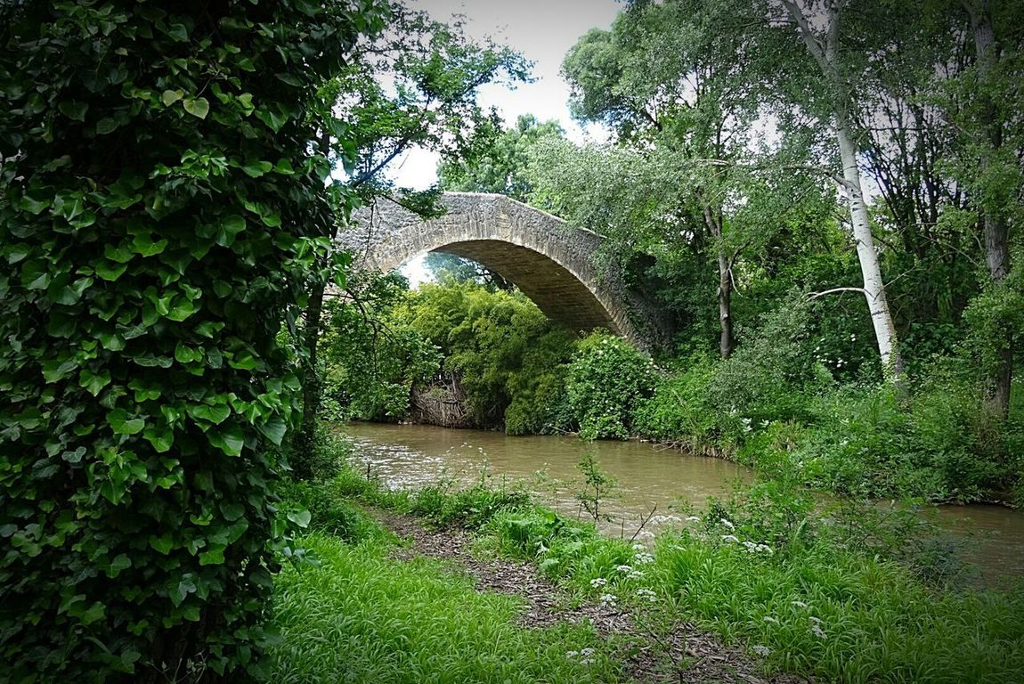 Riviere Water Architecture Rivières Plant Green Color Nature Tranquility River Grass Pont Bridge Tree ARCHE Built Structure Arch Beauty In Nature Outdoors
