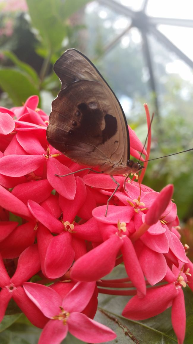 Butterfly Butterfly Garden Beauty In Nature Close Up Nature Perspective Nature Happy Good Life Enjoying Life Makesmesmile Having Fun Outdoors