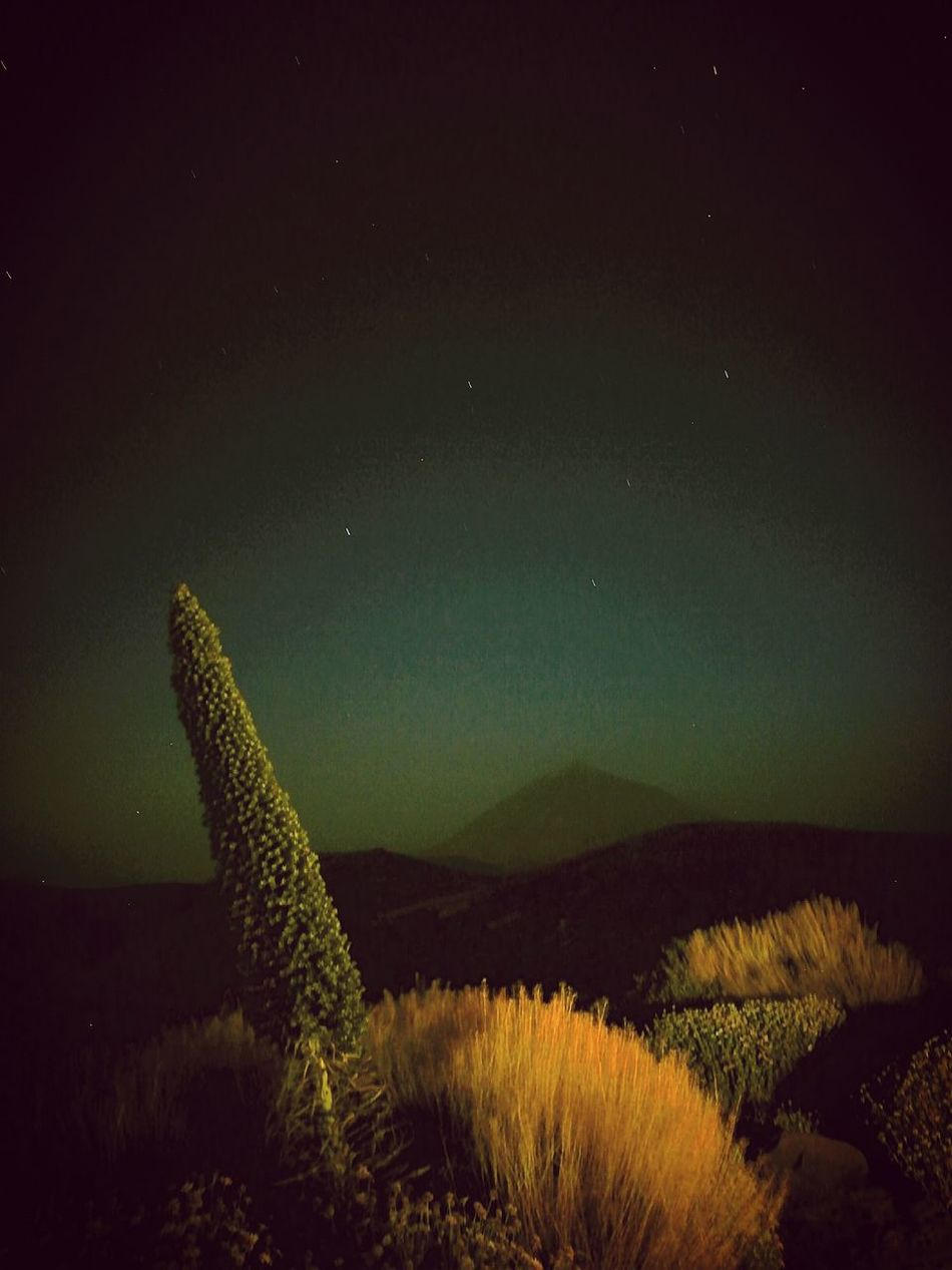 HuaweiP9 Nigthphotography Relaxing Leicacamera Canary Islands Teide Tajinaste Eyeem Market EyeEm Nature Lover Nigthpicture Tomanocturna Naturaleza Mountain Star Showcase July 43 Golden Moments New Talents New Talent Hidden Gems  My Favorite Place Overnight Success
