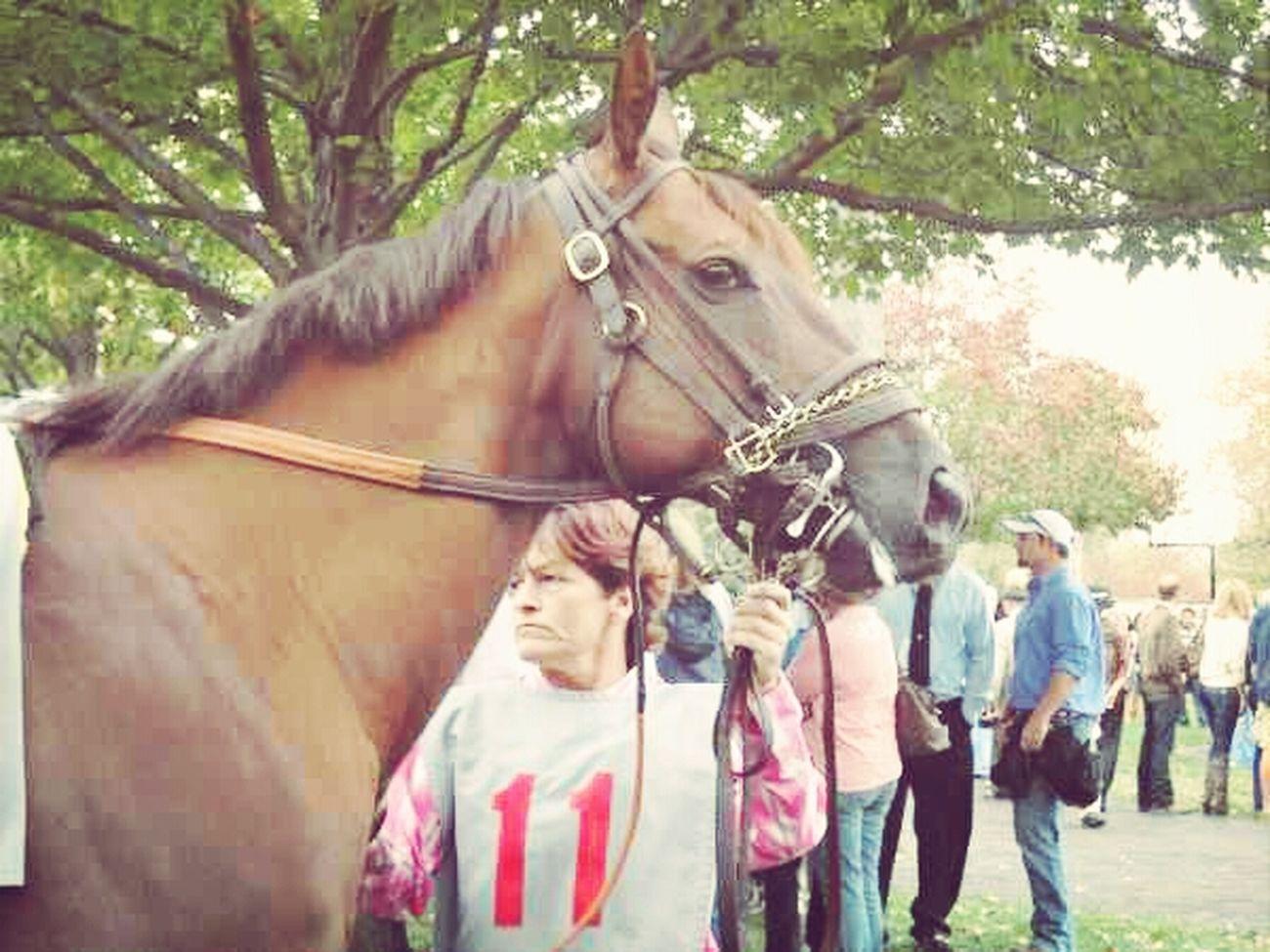 Horses Racetrack Fall Meet Keeneland