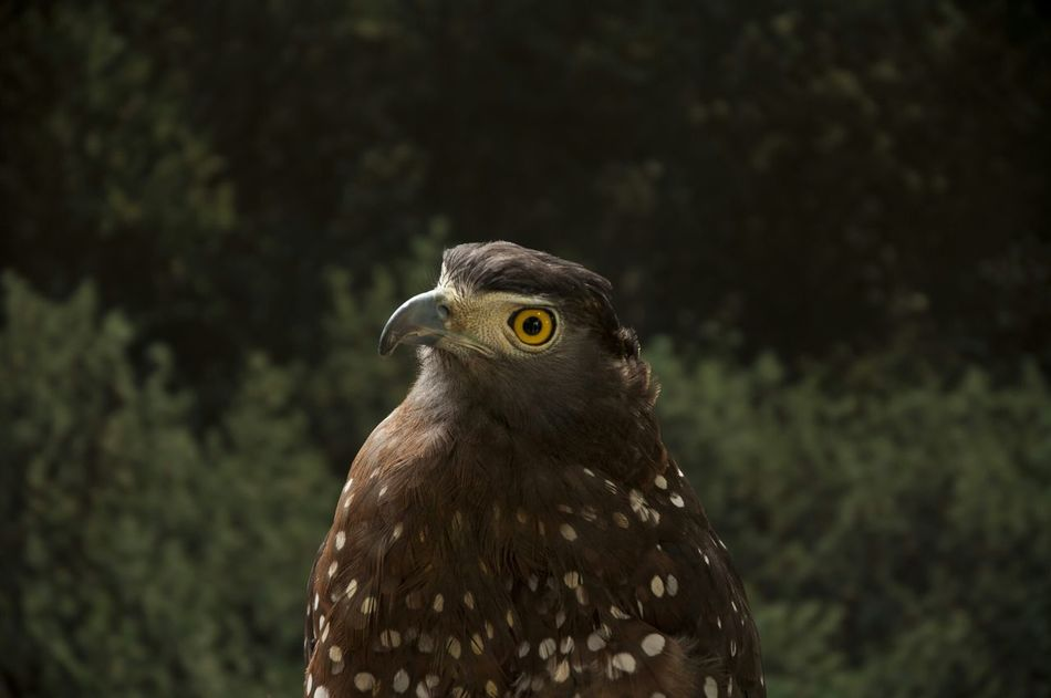 Beautiful stock photos of hawks, Animal Themes, Animals In The Wild, Bird, Bird Of Prey
