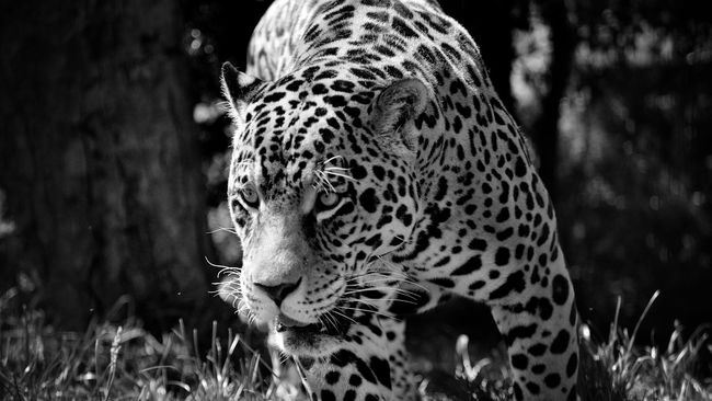 Cat Wild Blackandwhite Animals Nature Beautiful Eye4photography  Smile