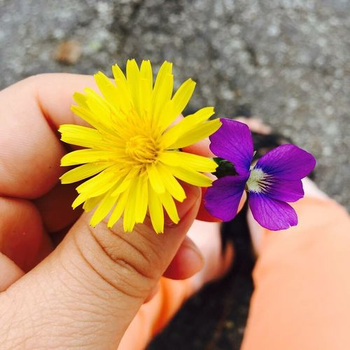 Flowers Hello World IPhoneography Yellow Flower Purple Flower