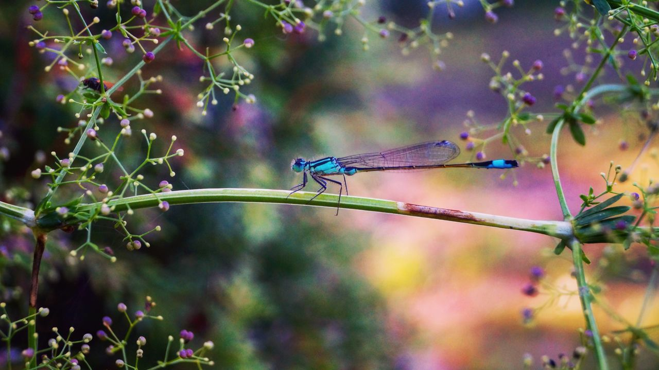 Dragonfly Ważka Insects  Insect Photography Dragonfly Photograohy