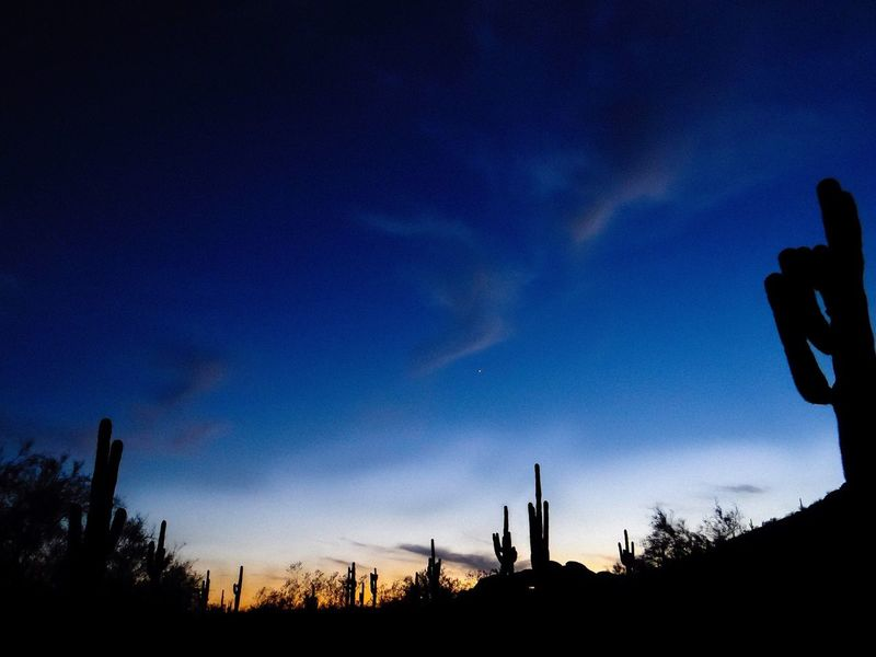 Arizona Sunset with Saguaro Cactus. Silhouette Sky Cloud - Sky No People Low Angle View Night Outdoors Nature Tranquil Scene Landscape Sunset Backgrounds Scenic Photograghy Colorful Tranquility Sonoran Desert Saguaro Cactus Coulds And Sky Stars Clouds And Stars Architecture The Great Outdoors - 2017 EyeEm Awards EyeEmNewHere Neighborhood Map An Eye For Travel