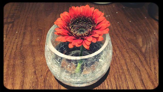 Flower Decoration On The Table Reddish