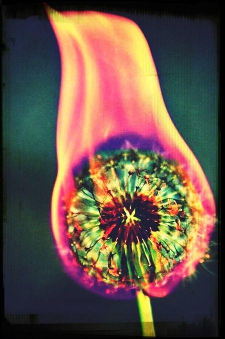 Burn BURN! Flover Enjoying Life