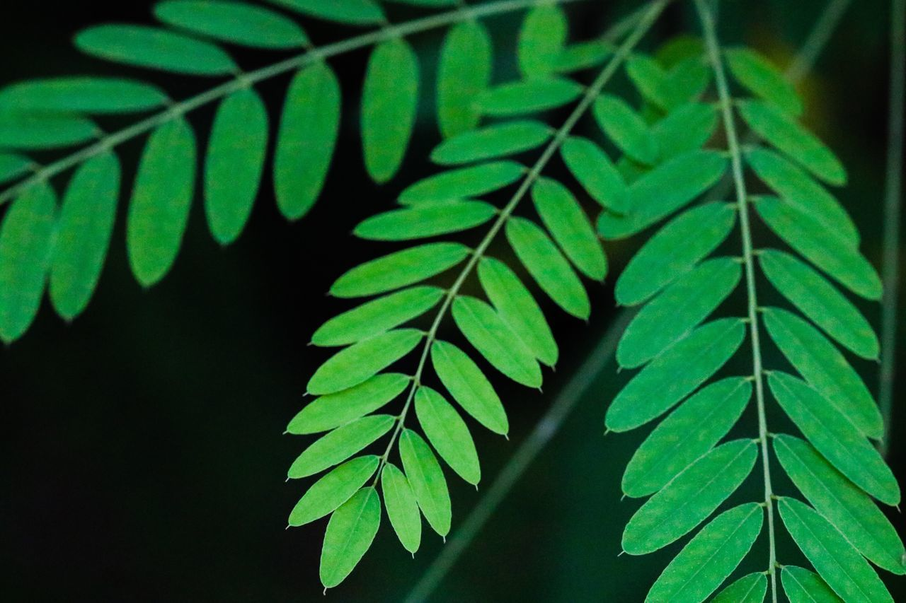 green color, leaf, growth, no people, close-up, plant, day, nature, outdoors, freshness, fragility, beauty in nature