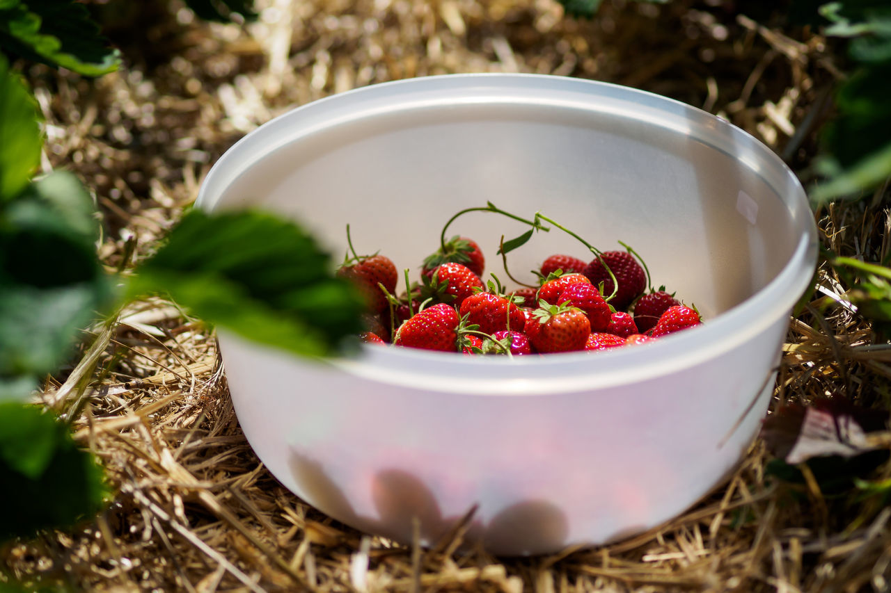 Some strawberries for the lunch Bowl Close-up Day Food Food And Drink Freshness Fruit Healthy Eating Nature No People Outdoors Ready-to-eat Strawberry
