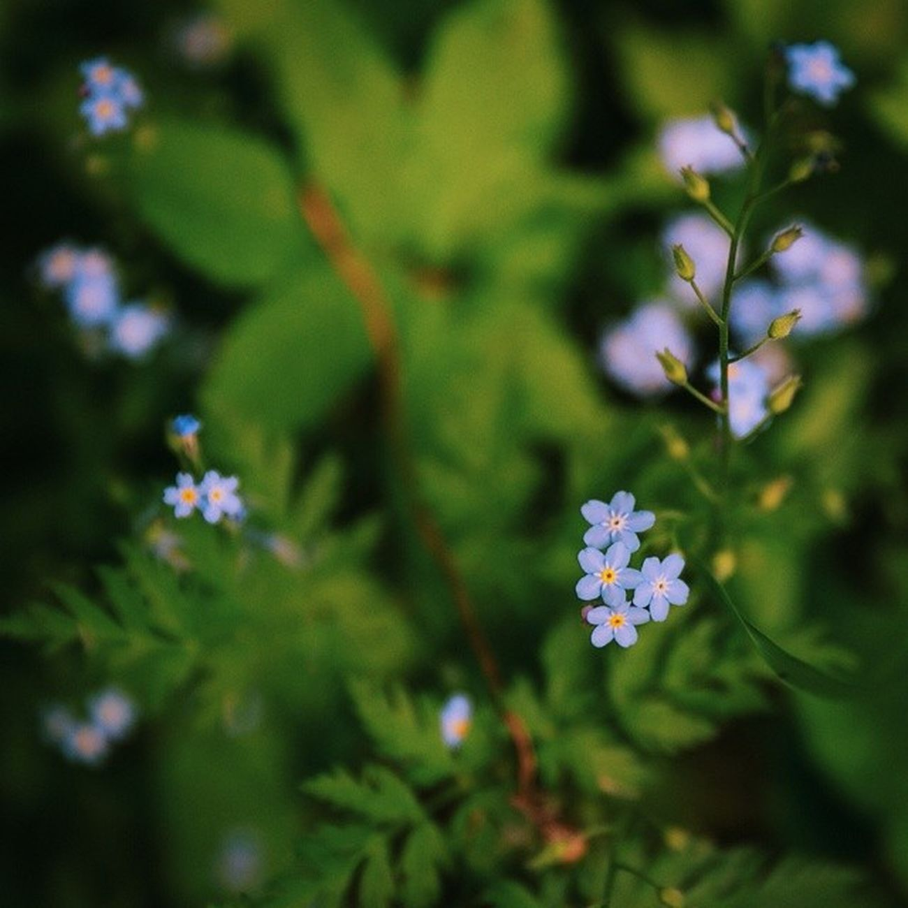 Спасибо, Весна, Вы были прекрасны Spring Cityminsk Cityflovers