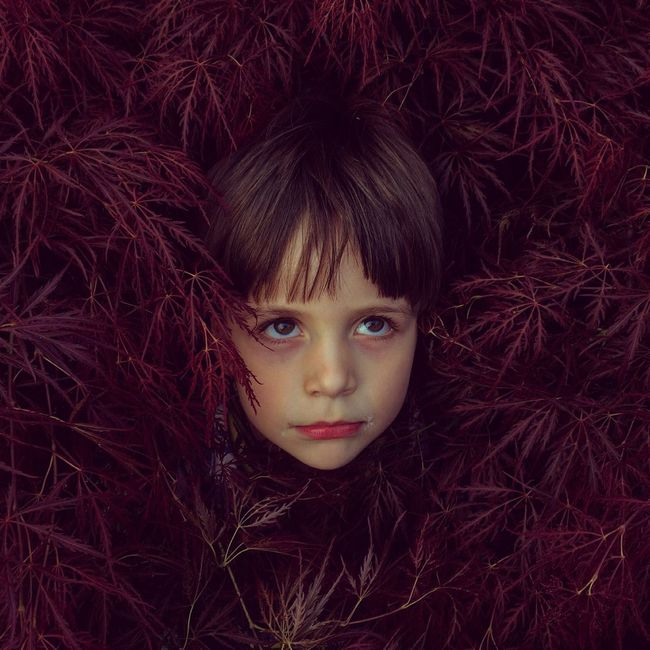 Boyhood Little Boy Portrait Bush Japanese Maple Leaves Conceptual Portrait Of A Child Family