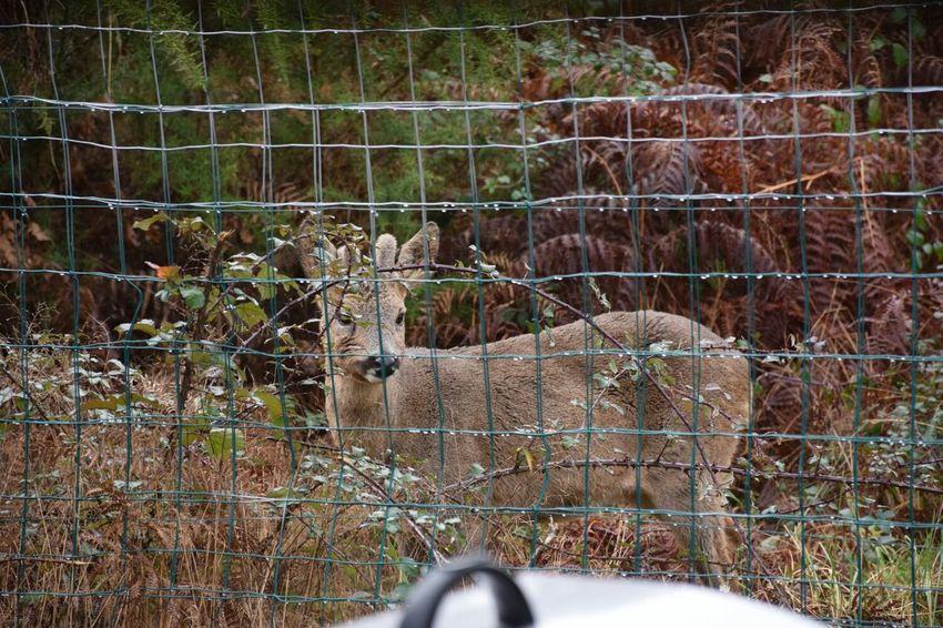Animals Doe Natural Biche