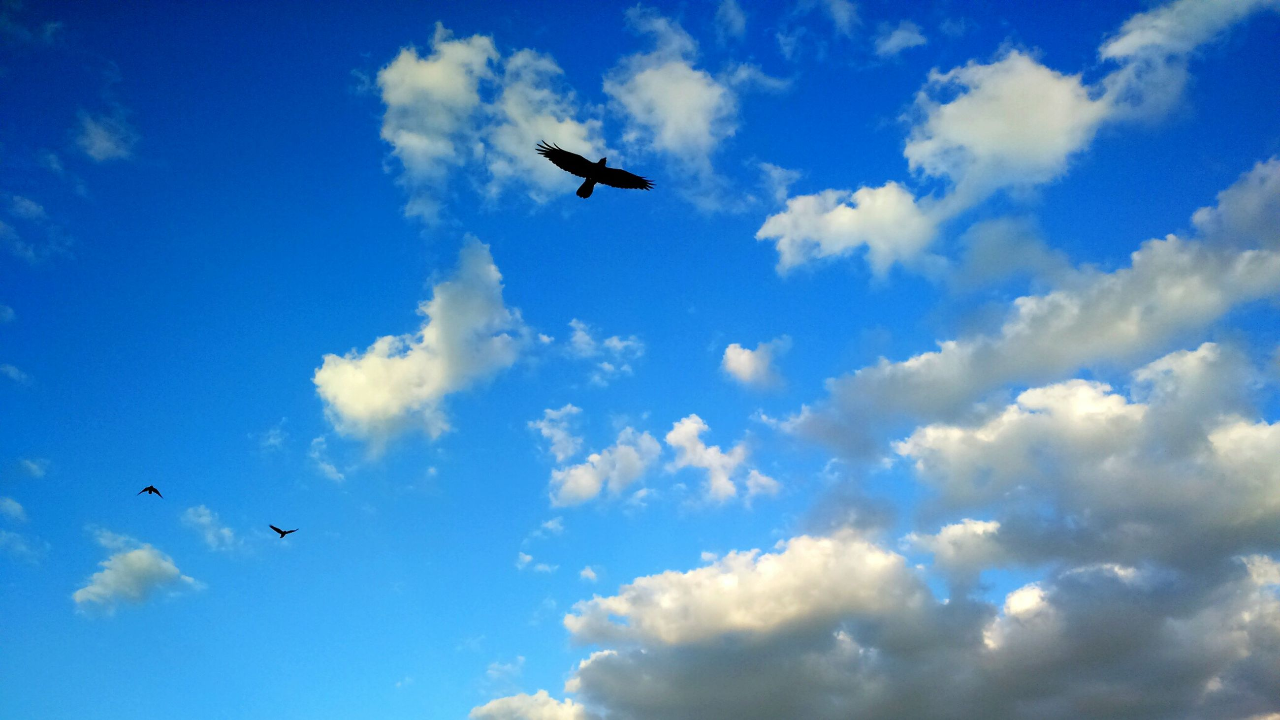 flying, low angle view, mid-air, bird, sky, airplane, blue, animal themes, air vehicle, wildlife, animals in the wild, transportation, on the move, cloud - sky, spread wings, mode of transport, flight, nature, cloud, day
