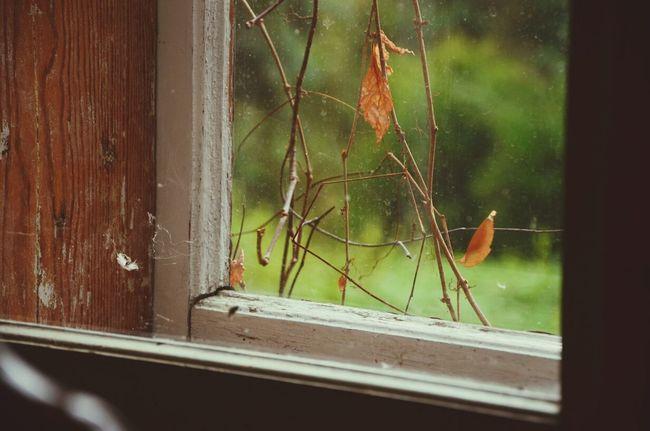 Autumn Autumn Loneliness Leaf Autumn Colors