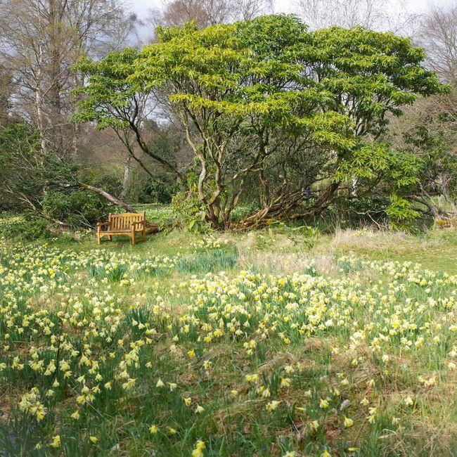 Spring Colour Garden Photography Design Scotland Tree_collection  Flaneur Nature Enjoying Nature