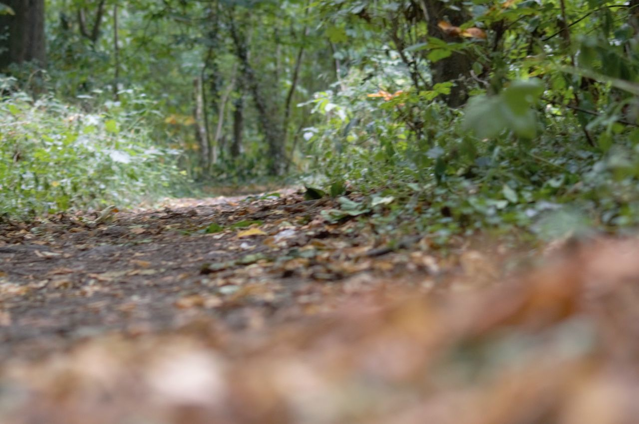 nature, selective focus, growth, tranquility, day, forest, plant, outdoors, no people, tree, beauty in nature, close-up