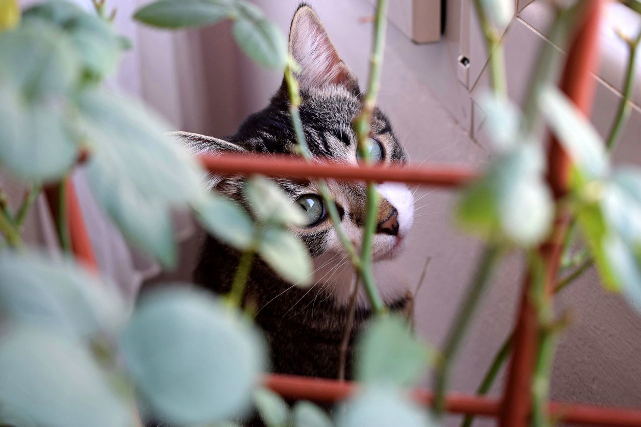 That cat something I can't explain. Cat Cats Catlovers Cat Eyes Cats Of EyeEm Mycat Rose🌹 Roses🌹 Rose Petals Bright Colors Focused Beautiful Cat Animal Eye Green Green Eyes