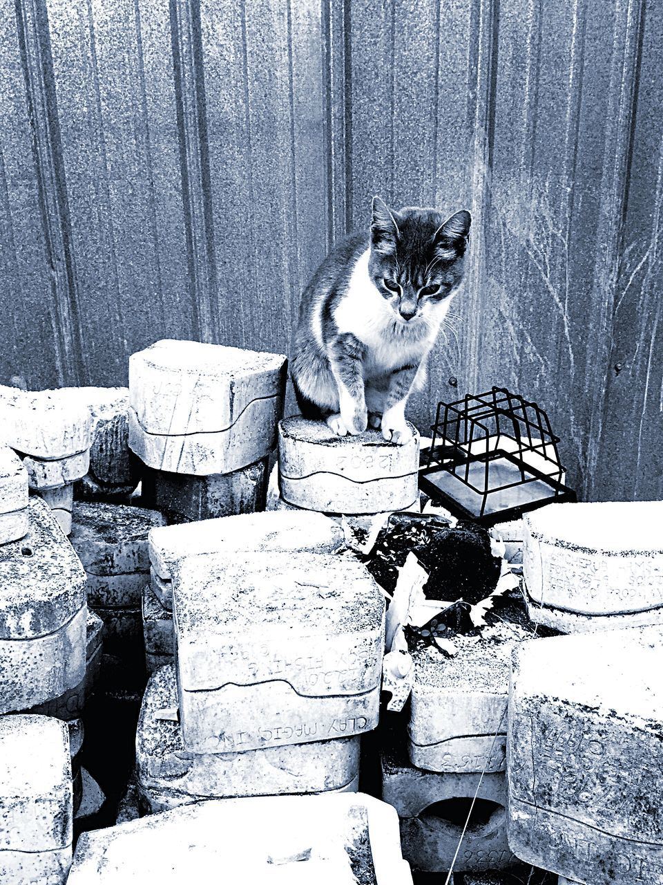 Cat Sitting On Stacked Boxes