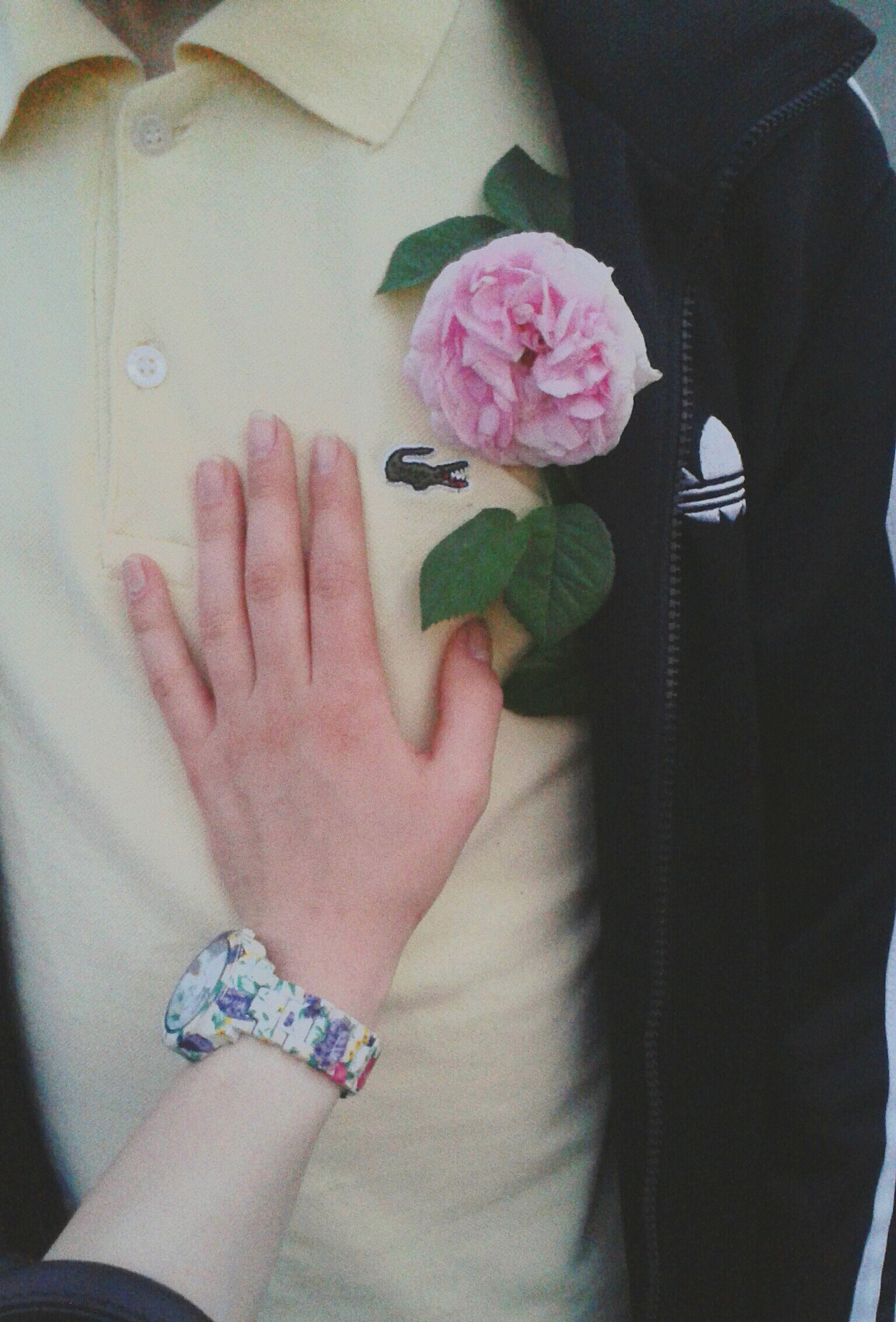 person, flower, holding, indoors, lifestyles, part of, fragility, freshness, petal, personal perspective, leisure activity, flower head, cropped, human finger, pink color, close-up